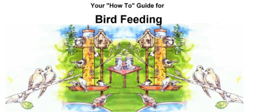 How-to guide for wild birds