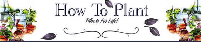 How-To Plant Plants for Life - landscaping
